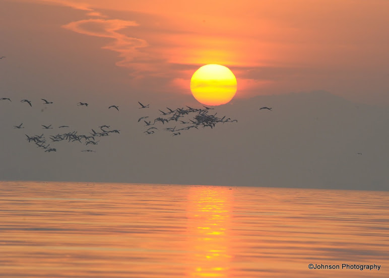 02 Sewri Flamingos