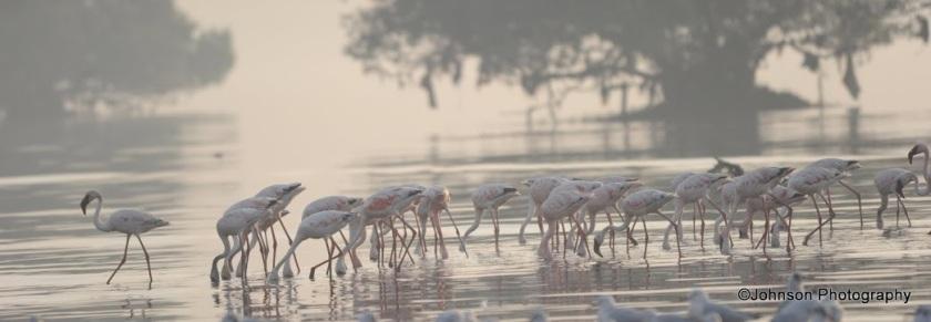 27 Sewri Flamingos