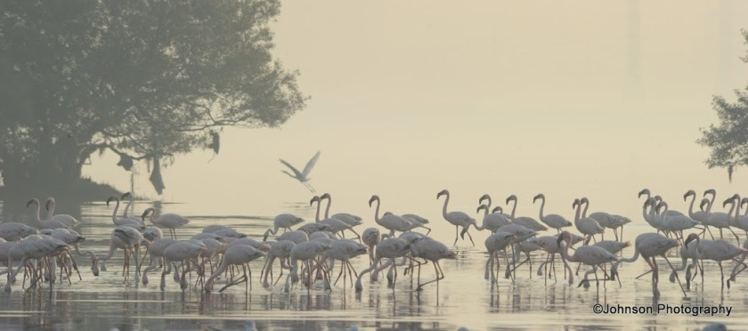 29 Sewri Flamingos