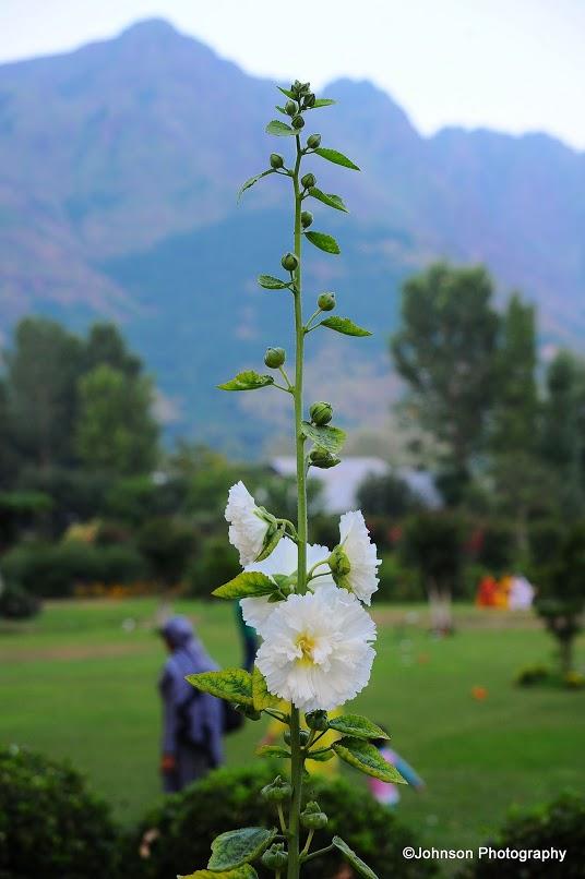 The Mughal Garden