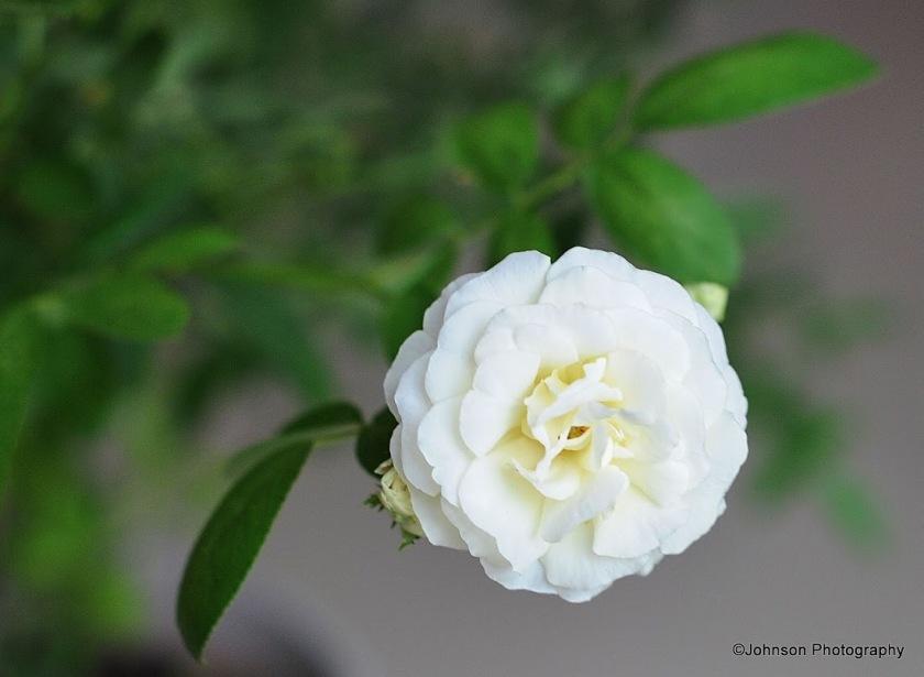 garden-36